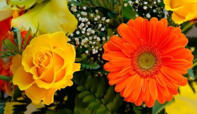 Fotossínteses das flores vão gerar a energia - Foto: Divuglação