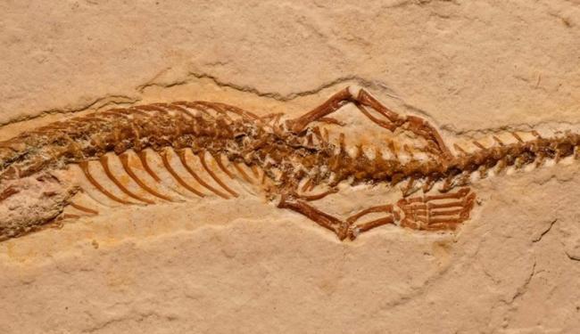 Um fóssil excepcionalmente bem preservado foi encontrado no Ceará - Foto: Reprodução