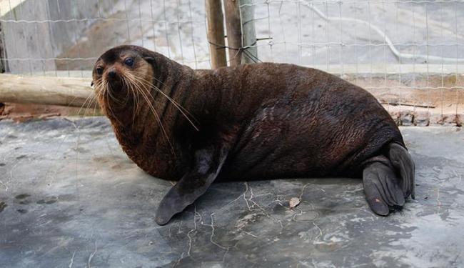 Alguns mamíferos chegam debilitados e requer cuidado na manipulação - Foto: Margarida Neide | Ag. A TARDE