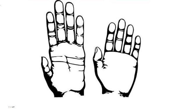 Mãos de um macaco e a de um humano - Foto: Divulgação