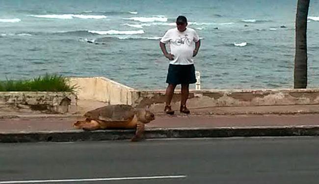 Tartaruga foi deixada em calçada da orla da Pituba - Foto: Foto de leitor   Via WhatsApp