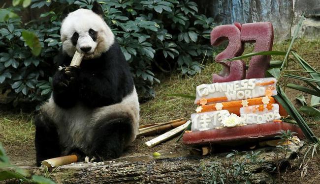 Jia Jia faz 37 anos hoje com direito a bolo de vegetais e sorvete - Foto: Bobby Yip TPX Images of The Day | Ag. Reuters