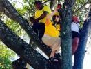 Regina Duarte faz selfie em cima de árvore durante protesto - Foto: Reprodução | Instagram