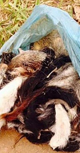 Carne de gato pode ter sido comercializada em festa - Foto: Divulgação | Polícia Civil de Minas Gerais