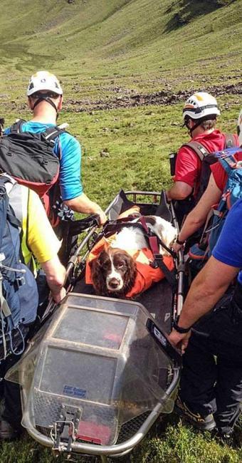 Woody foi resgatado por voluntários após acidente - Foto: Reprodução | Brecon Mountain Rescue