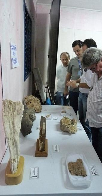 Fósseis estarão expostos em São Desidério dias 20 e 21 - Foto: Carolina Scherer l Divulgação
