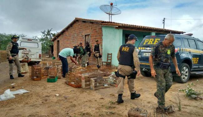 Animais de diversas espécies foram entregues ou resgatados, durante a ação que durou dez dias - Foto: Divulgação | PRF