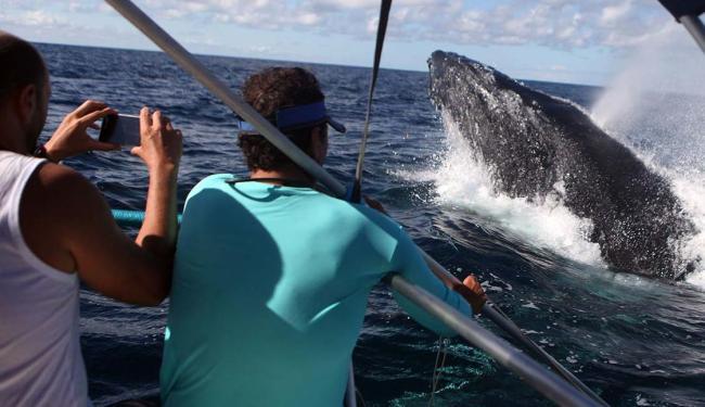 Observadores fotografam uma baleia bem de perto - Foto: Lúcio Távora   Ag. A TARDE