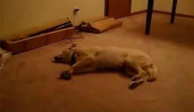 Cachorro sonha que está correndo e acaba batendo a cabeça na parede - Foto: Reprodução