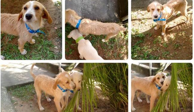 Os dois cachorrinhos são muio unidos - Foto: Arquivo Pessoal