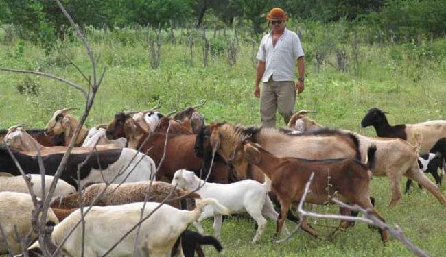 A criação de cabras e ovelhas é uma forte tradição na agricultura familiar - Foto: Ivan Cruz | Ag. A TARDE