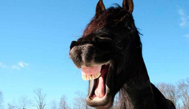 Cavalos se igualam aos homens e macacos nas expressões faciais - Foto: Divulgação