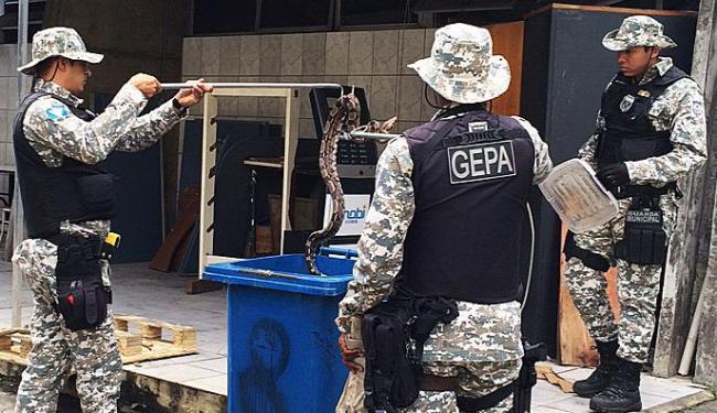 Agentes do Grupamento Especial de Proteção Ambiental fizeram a remoção da cobra - Foto: Ag. A TARDE