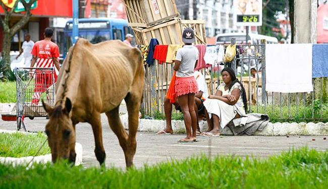 Cavalo pasta no gramado da praça, evidenciando falha na fiscalização - Foto: Marco Aurélio Martins l Ag. A TARDE
