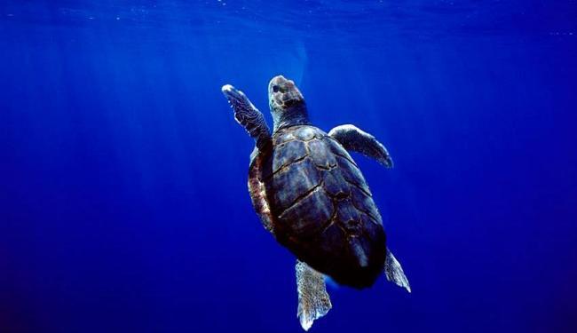 Soltura de filhotes de tartaruga faz parte da programação - Foto: Reprodução | Projeto Tamar