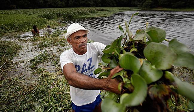 Seu Madruga no trabalho de retirada das baronesas - Foto: Raul Spinassé l Ag. A TARDE