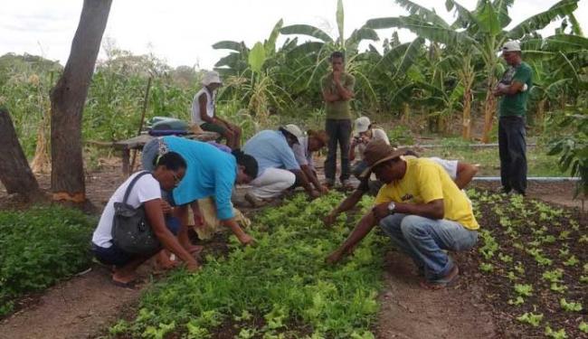 Especialistas ensinam para famílias assentadas técnicas para o cultivo irrigado - Foto: Tibério Martins | Divulgação