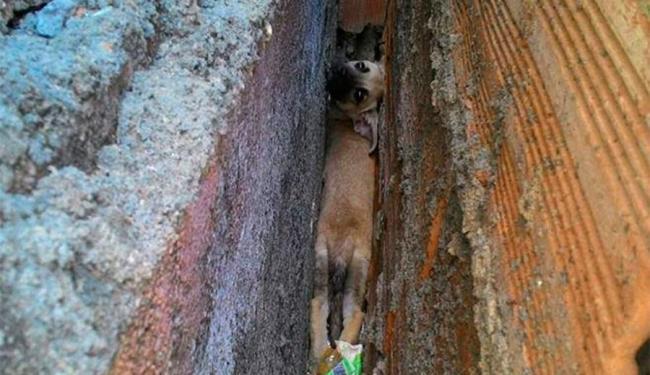 Filhote ficou três dias presa em vala estreita no bairro de Plataforma, em Salvador - Foto: Reprodução | Facebook