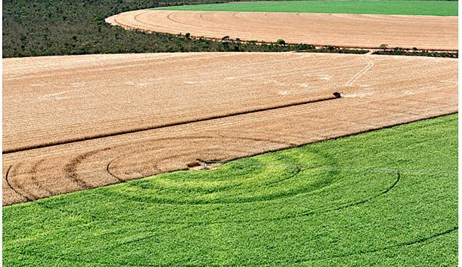Na região oeste da Bahia, os fertilizantes movimentam cerca de R$ 1,3 bi por ano, segundo a Aiba - Foto: Rui Rezende l Divulgação