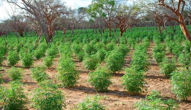 A planta será cultivada pela própria comunidade - Foto: Divulgação | PF