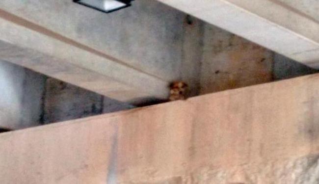 O cão está preso na parte elevada do túnel - Foto: Cidadão Repórter   Via WhatsApp