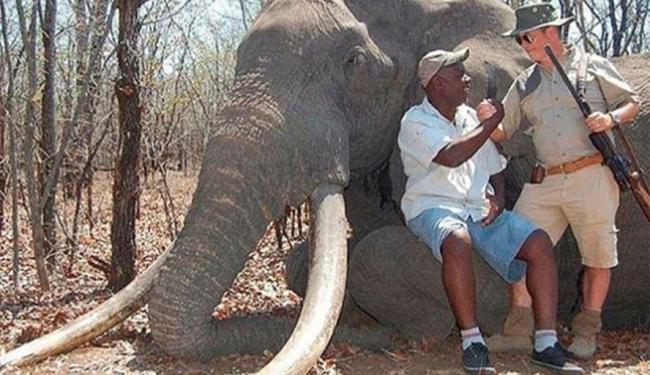 Elefante de mais de 50 anos era considerado um