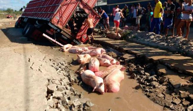 Porcos que estavam no caminhão acabaram morreram no acidente - Foto: Reprodução | Acorda Cidade