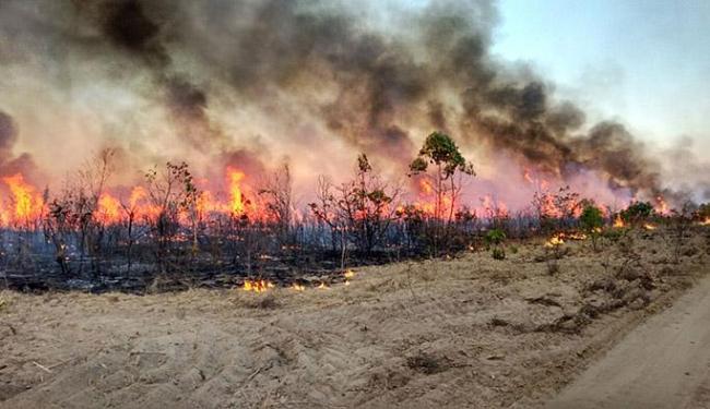 Barra: ar seco, calor e vento forte favoreçem a propagação do fogo - Foto: Major Carregosa l Corpo de Bombeiros Militar