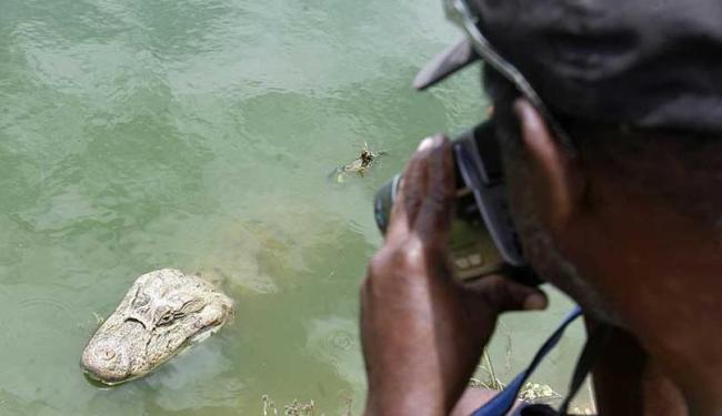 Jacarés da Lagoa Grande, em Feira, viraram atração turística - Foto: Luiz Tito | Ag. A TARDE