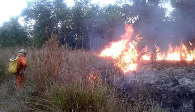 Em Formosa do Rio Preto, área de vegetação é consumida pelas chamas espalhadas pelos ventos - Foto: Divulgação l Corpo de Bombeiros