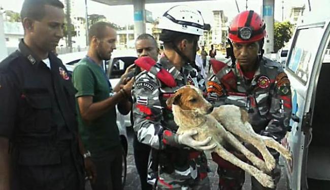 Bombeiros Voluntários da Capital ajudaram no resgate - Foto: Ss. Bv. Nascimento | Divulgação