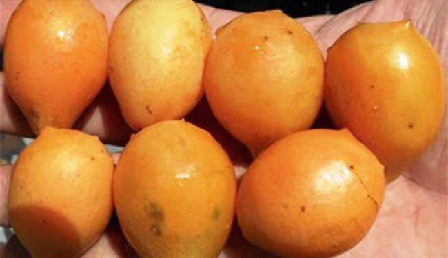 O umbucajá é amplamente consumido in natura ou na forma industrializada - Foto: Divulgação l UFRB