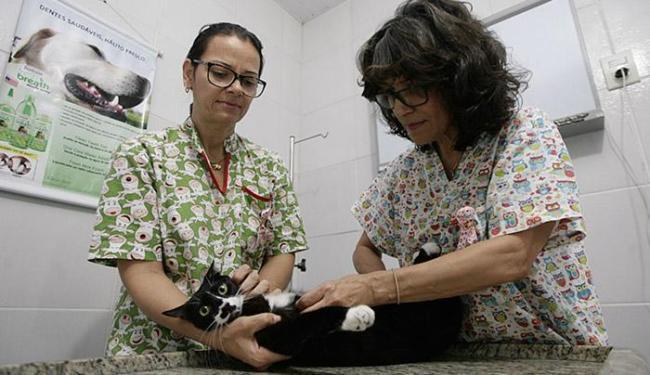 Veterinária Ara Coeli e sua assistente mostram como fazer a apalpação das mamas da gatinha - Foto: Raul Spinassé l Ag. A TARDE
