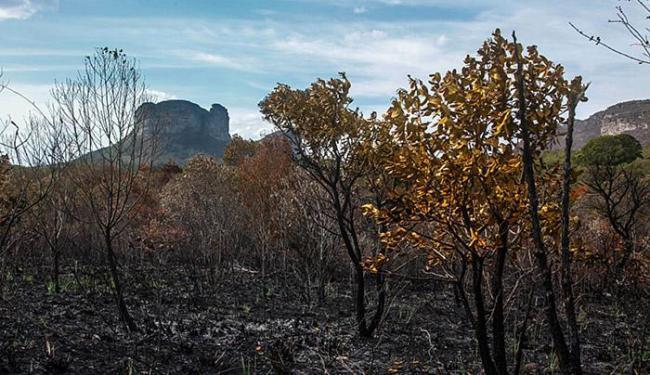 Leitor de A TARDE registrou área danificada pelo fogo na região de Lençóis - Foto: Alex Sander Pinto l Cidadão Repórter