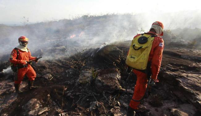 A Secretaria de Meio Ambiente da Bahia estima que cerca de 15 a 30 mil hectares - Foto: Mateus Pereira | GovBA