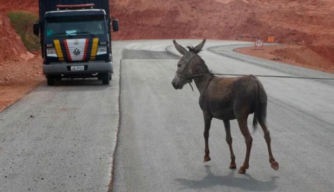 O objetivo é evitar acidentes envolvendo animais e veículos na estrada - Foto: Reprodução | Gestão Ambiental da BR-235