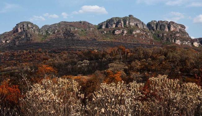 oito hectares de 70 replantados foram queimados - Foto: ASA65 | Cidadão Repórter
