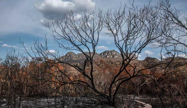 Incêndio atingiu mais de 30 mil hectares da Chapada Diamantina - Foto: ASA65 | Cidadão Repórter