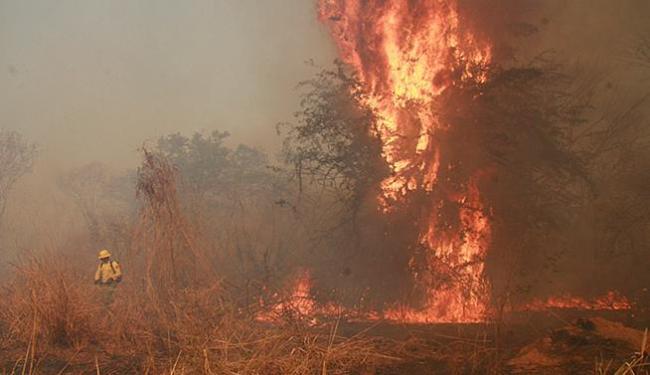 Vegetação ressecada devido à estiagem favorece os incêndios - Foto: Miriam Hermes l Ag. A TARDE