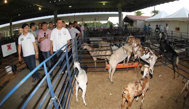 Governador Rui Costa esteve na abertura da Fenagro, no sábado, 28 - Foto: Divulgação | Secom Bahia