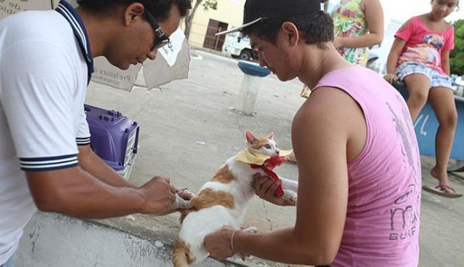 Felinos e caninos receberam medicação, neste sábado - Foto: Marco Aurélio Martins l Ag. A TARDE