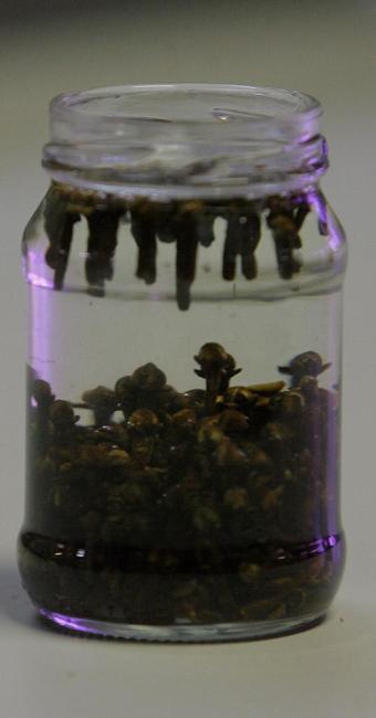 Repelente caseiro: álcool de cereais, óleo de amêndoas e cravo-da-índia - Foto: Margarida Neide | Ag. A TARDE