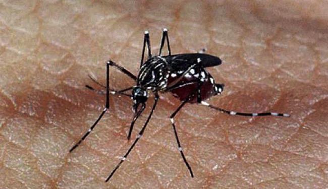 O Aedes aegypti é responsável pela disseminação da dengue, zika e chikungunya - Foto: Agência Brasil