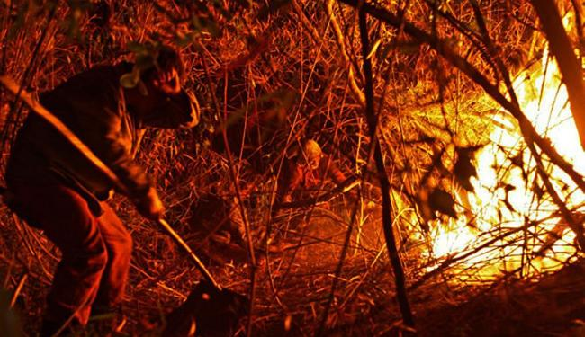 Em novembro o incêndio destruiu quase 8 mil hectares do Parque Nacional da Chapada - Foto: Bral | Divulgação