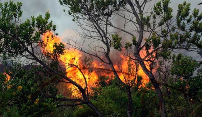Incêndio em Ibicoara atinge região de floresta - Foto: Reprodução | Facebook