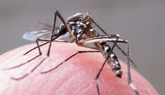 Moradores devem descartar entulhos e materiais que podem servir de criadouro para o mosquito - Foto: Rafael Neddermeyer | Fotos Públicas