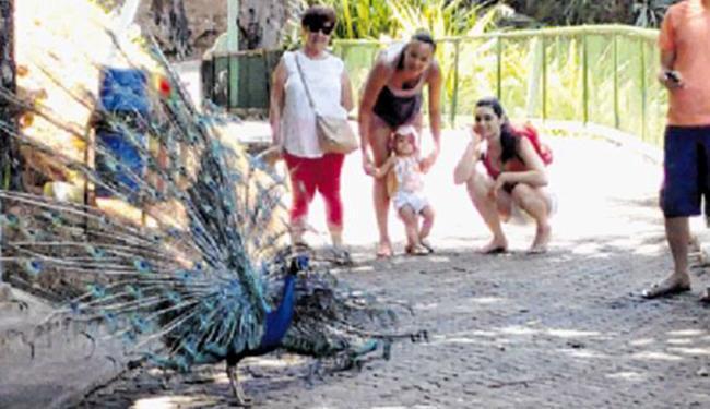 A pequena Clara Amorim encantou-se com a beleza e as cores das plumas do pavão - Foto: Aina Soledá l Ag. A TARDE