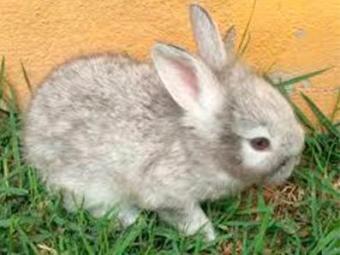 Casal tinha dois coelhos em casa - Foto: Reprodução