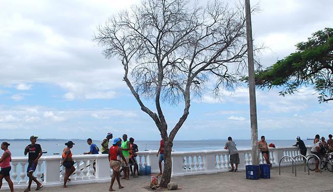 Segundo a Secretaria de Manutenção, há risco de algum galho cair sobre alguém - Foto: Divulgação | Prefeitura de Salvador