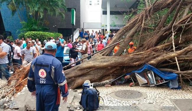 Árvore caiu em cima da vítima - Foto: Jefferson Domingos | Ag. A TARDE